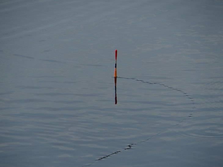 Ловля леща на поплавок с берега: секреты крупных уловов от профессионалов
