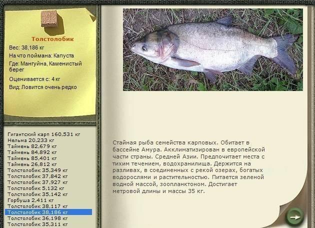 Толстолобик: где, на что, когда и как ловить? — рыбацкая усадьба «максимиха»
