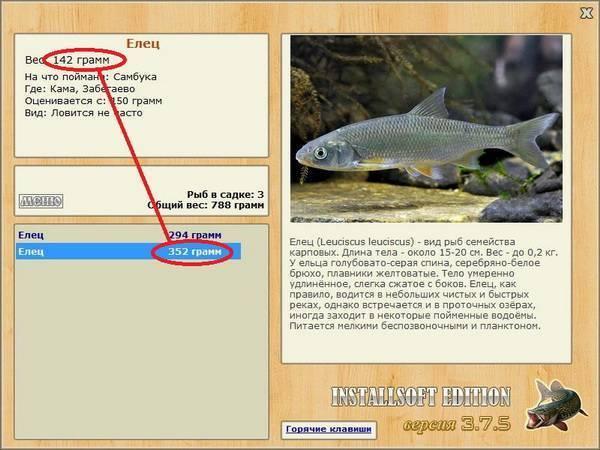 Рыба бычок: повадки, техника и тактика ловли