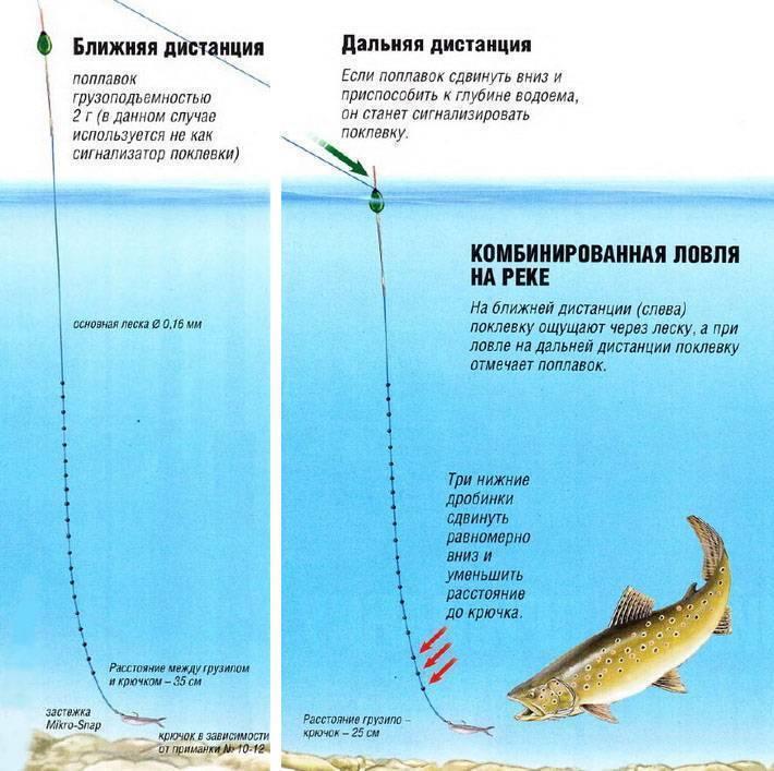 Ловля форели на поплавок: оснастка, выбор места, методы рыбалки