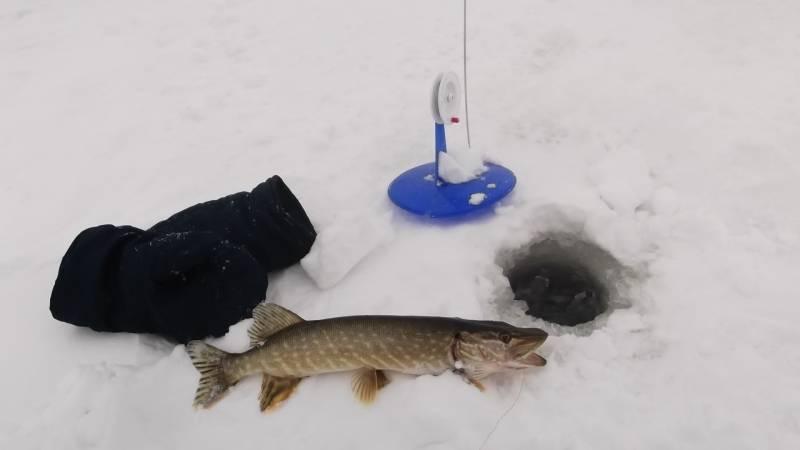 Ловля щуки зимой на жерлицы – правила оснастки и монтаж [2019]