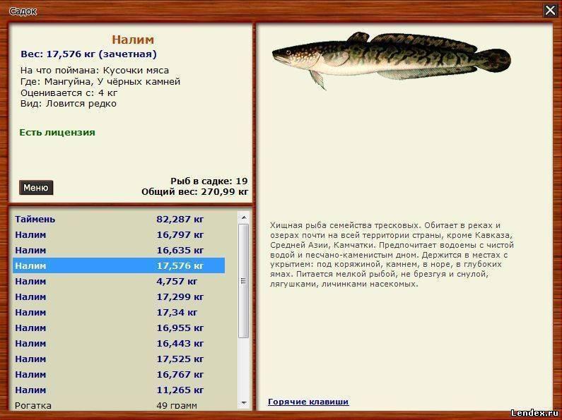 Налим | фото, виды рыб, ареал обитания, образ жизни и способ ловли