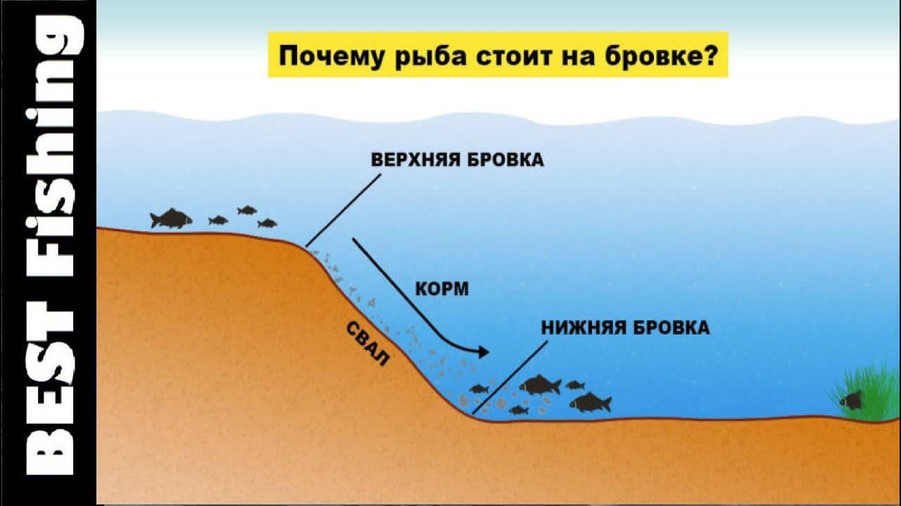 Панацея от бесклевья или почему рыба не клюет