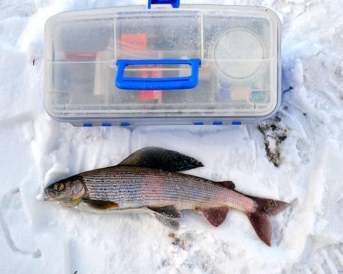 Рыбалка в кемеровской области зимой или летом, особенности ловли хариуса в кемерово