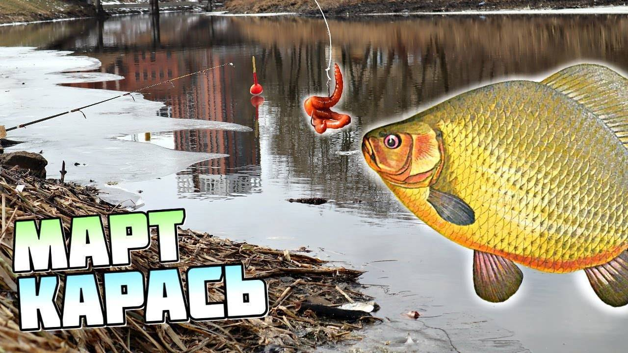 Ловля карпа весной - на рыбалке!