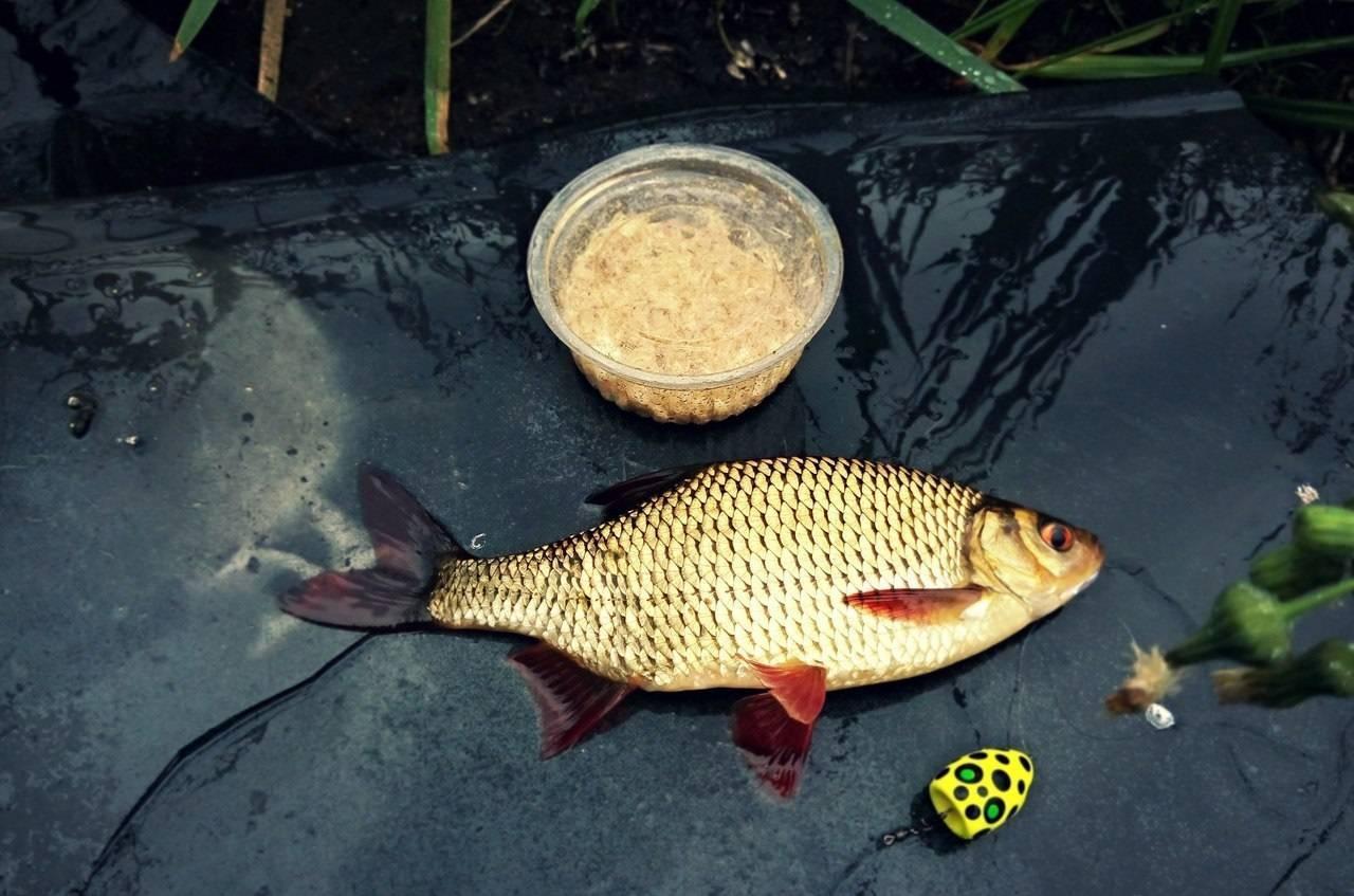 Как ловить красноперку осенью в сентяре, октябре и ноябре