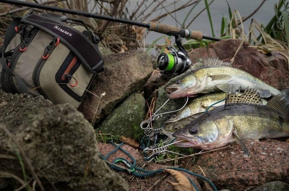Ловля судака осенью, летом и зимой: особенности сезонной ловли в сентябре, зимняя рыбалка