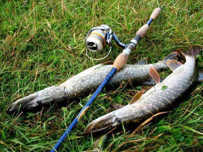 Твичинг - что это такое? как выбрать спиннинг, катушку и воблера. ловля твичингом