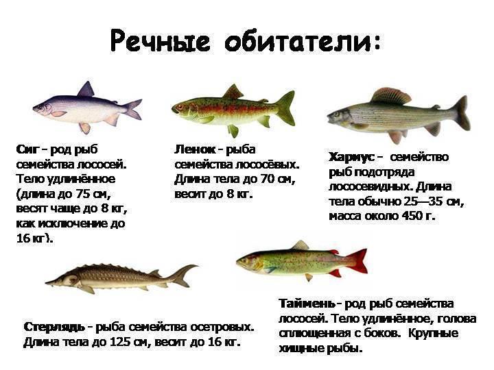 Паразиты в рыбе: виды, заболевания человека, меры безопасности от заражения