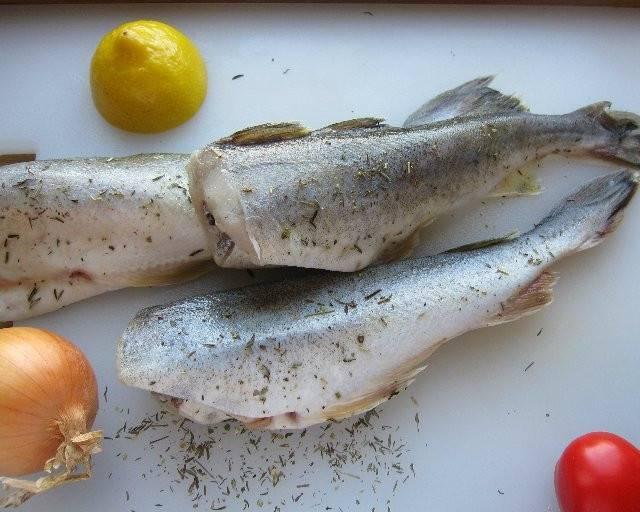 Конгрио что за рыба, польза и вред, свойства креветочной рыбы