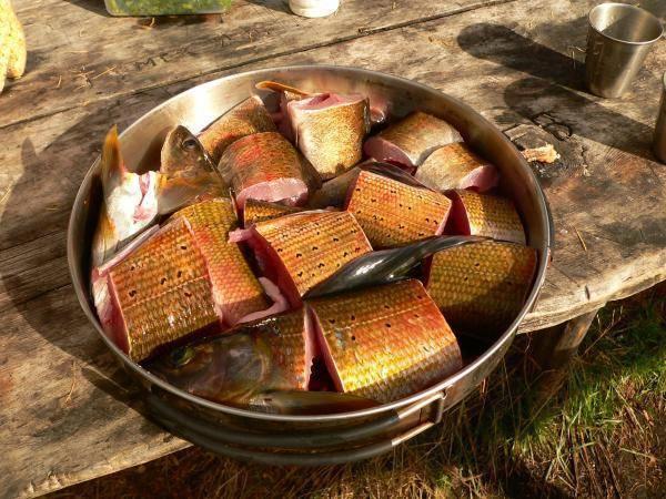 Блюда из косули: подготовка мяса, выбор специй, особенности приготовления, примеры простых рецептов, фото - truehunter.ru