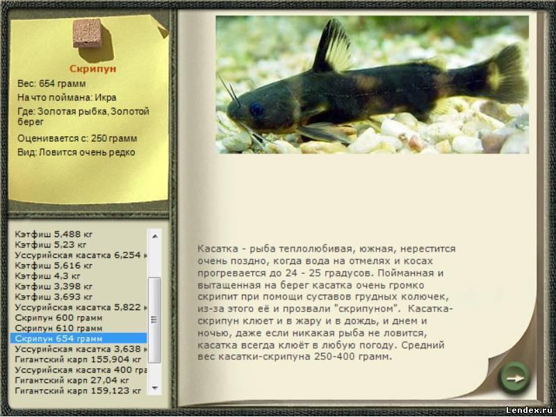 Рыба «Косатка-скрипун» фото и описание