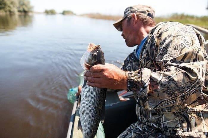 Рыбалка в могилеве: уловистые места и используемые снасти