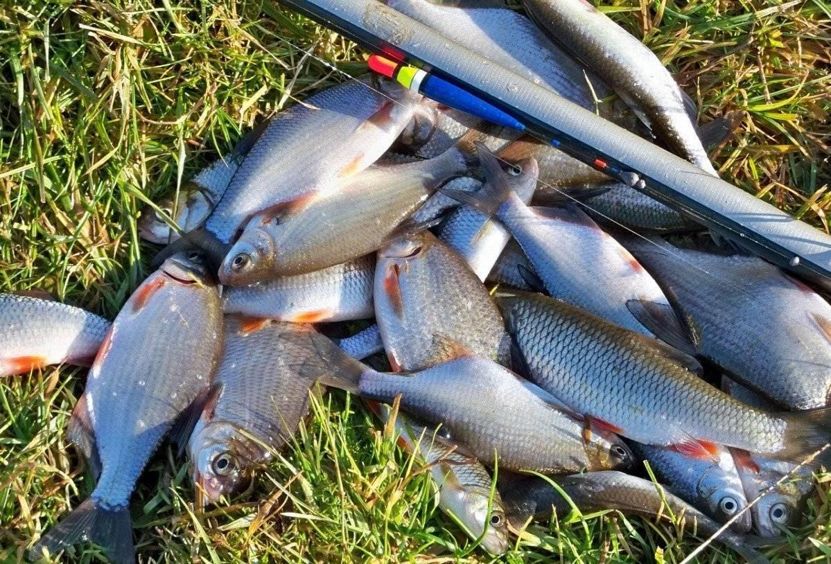 Рыбалка на плещеевых озерах – суперулов – интернет-портал о рыбалке