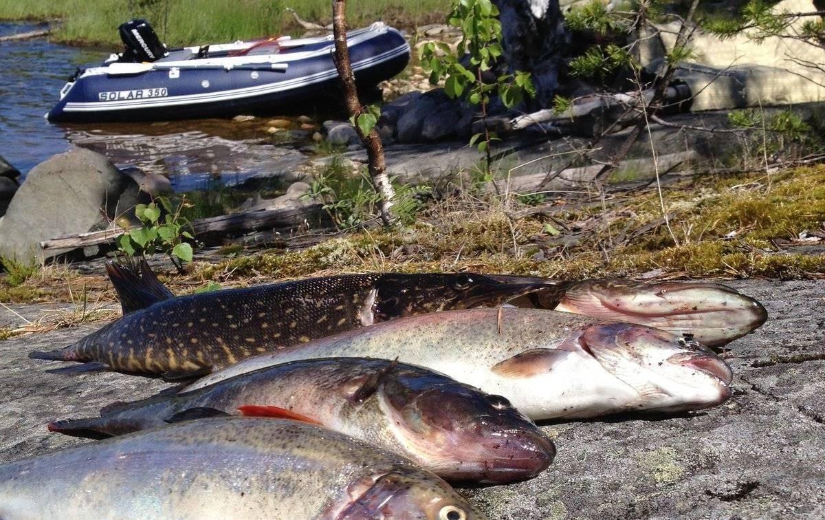 Рыбалка осенью: в октябре, сентябре и ноябре. куда поехать на осеннюю ловлю рыбы? что клюет на волге и реке ахтубе? ловля на спиннинг и фидер
