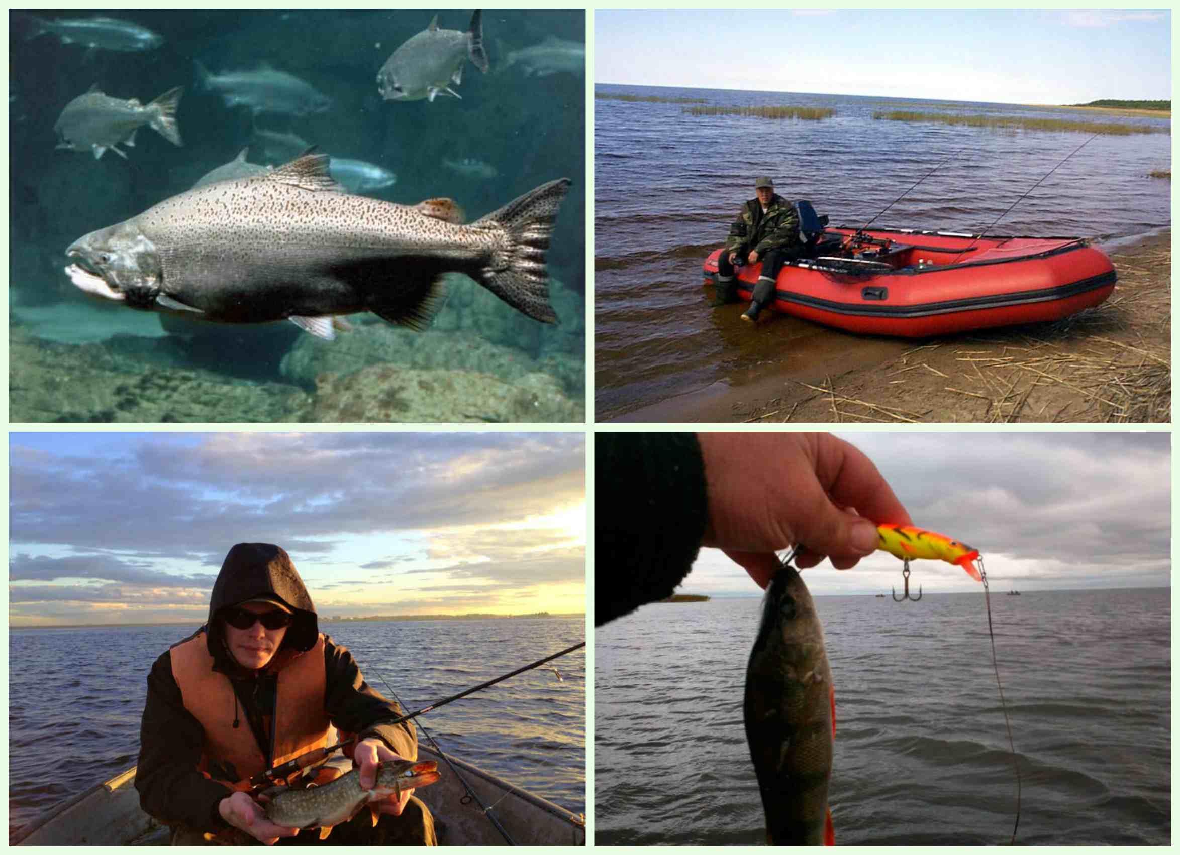 Рыбалка на ладожском озере: выбор снастей, места и тактики ловли