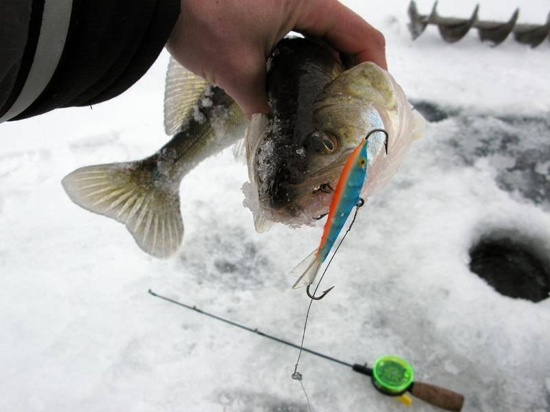 Ловля щуки зимой на балансир, техника ловли, выбор снастей и обзор балансиров