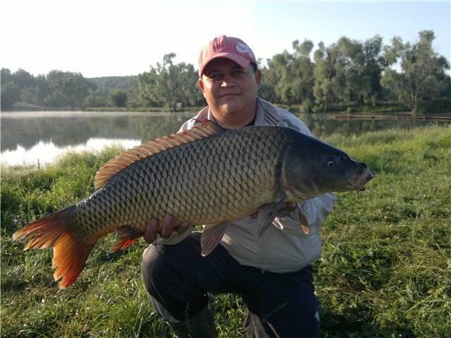 «богатый» барыш и «безрыбный» новоспасский район. где в ульяновской области отменная рыбалка? | главные новости ульяновска