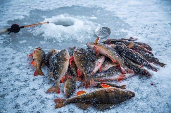 Ловля рыбы на енисее: места и особенности