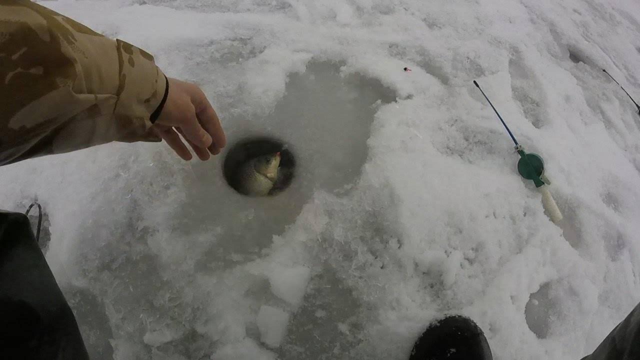 Ловля карася зимой: снасти, время, особенности ловли