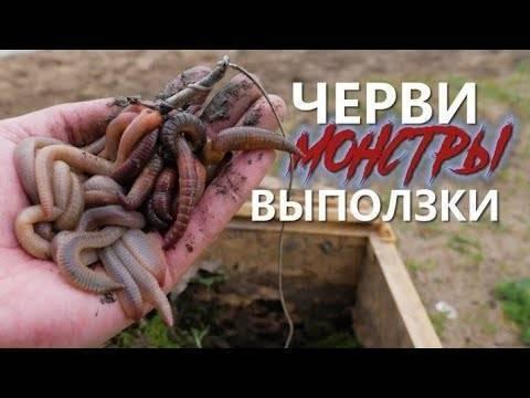 Виды рыболовных червей для рыбалки