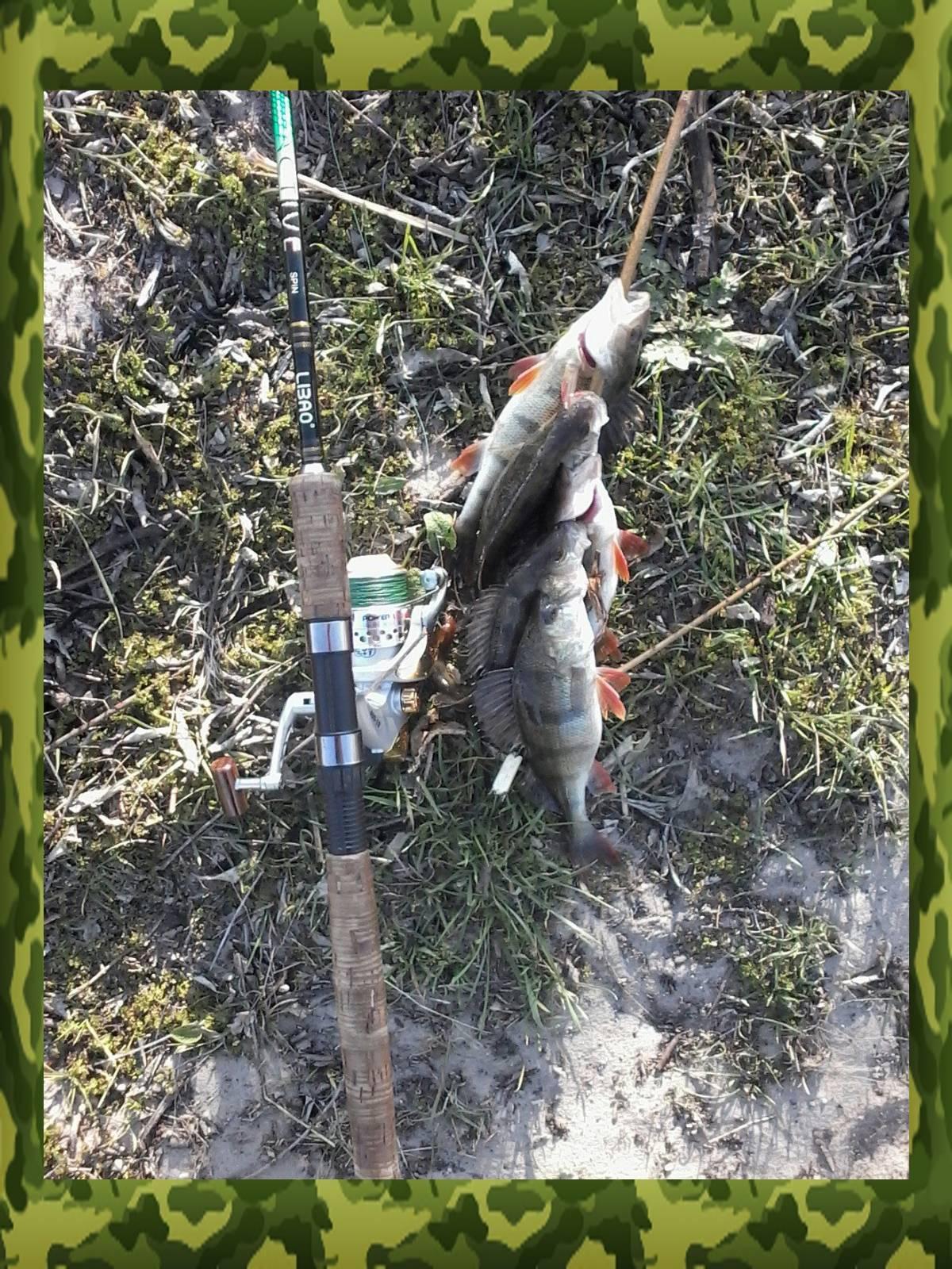 Ловля окуня на спиннинг с берега: места ужения и выбор приманки