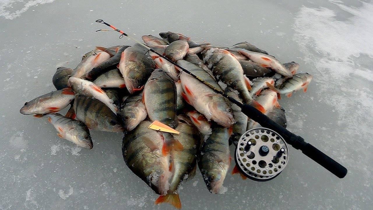 Ловля линя зимой на прудах и озерах с применением зимних прикормок снастей удочек фото видео