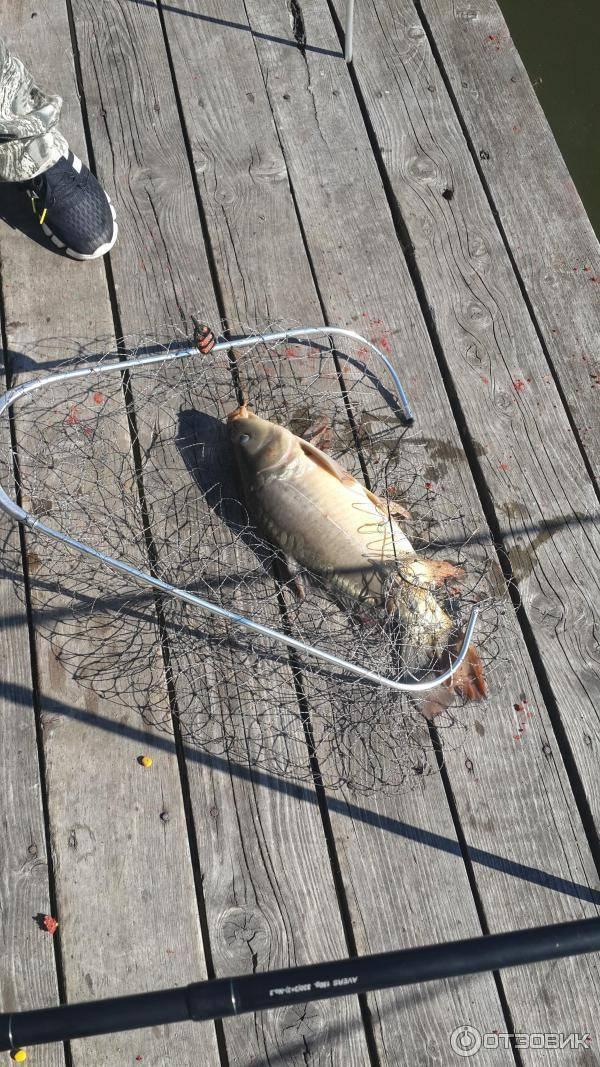 Рыбалка на дубешне под звенигородом, лучшие места для ловли на москве-реке