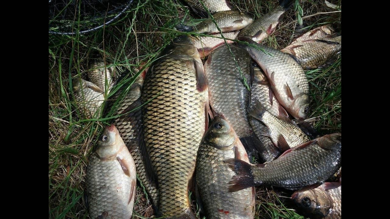 Ловля карпа ранней весной - лучшие наживки, прикормки и время - на рыбалке!