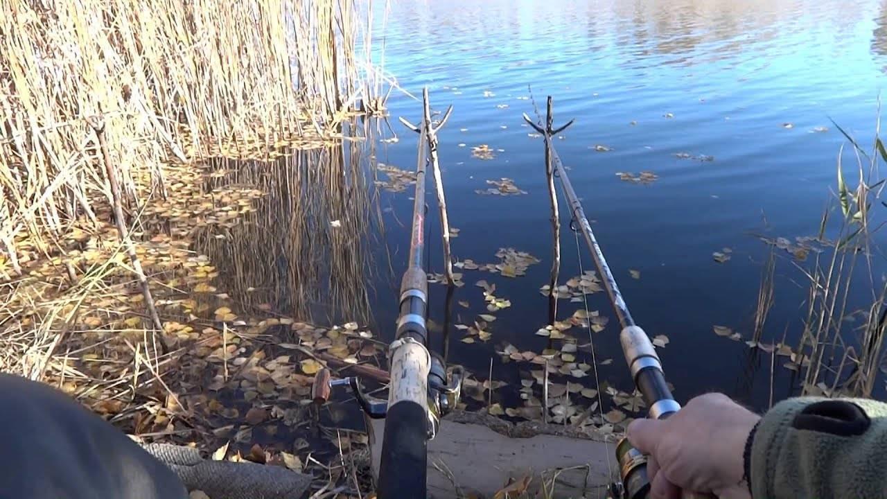 Как ловить карася на фидер на пруду и реке