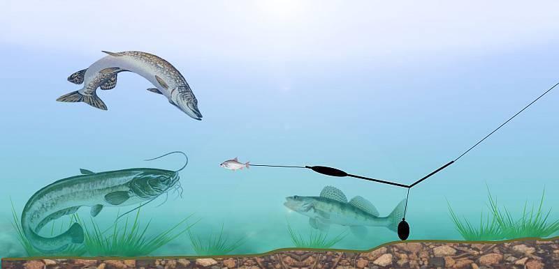Ловля сома на лягушку - читайте на сatcher.fish
