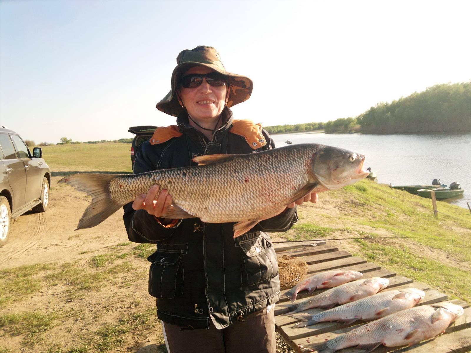 Платная рыбалка и рыболовные туры ставропольского края