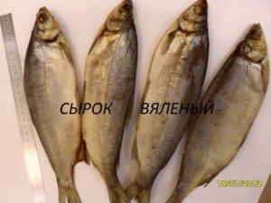 Рыба пелядь (сырок) фото и описание