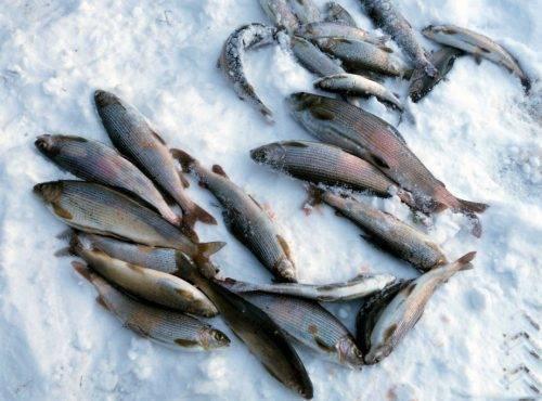 Рыбалка в кемеровской области 2018: платная и бесплатная