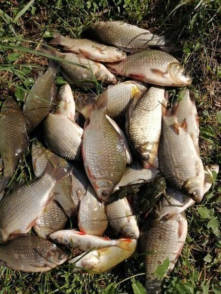 Липецк - календарь рыболова. рыбалка в липецке, график клёва рыбы.