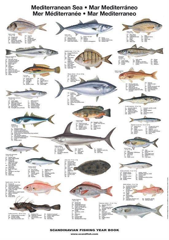 Является ли рыба морепродуктом
