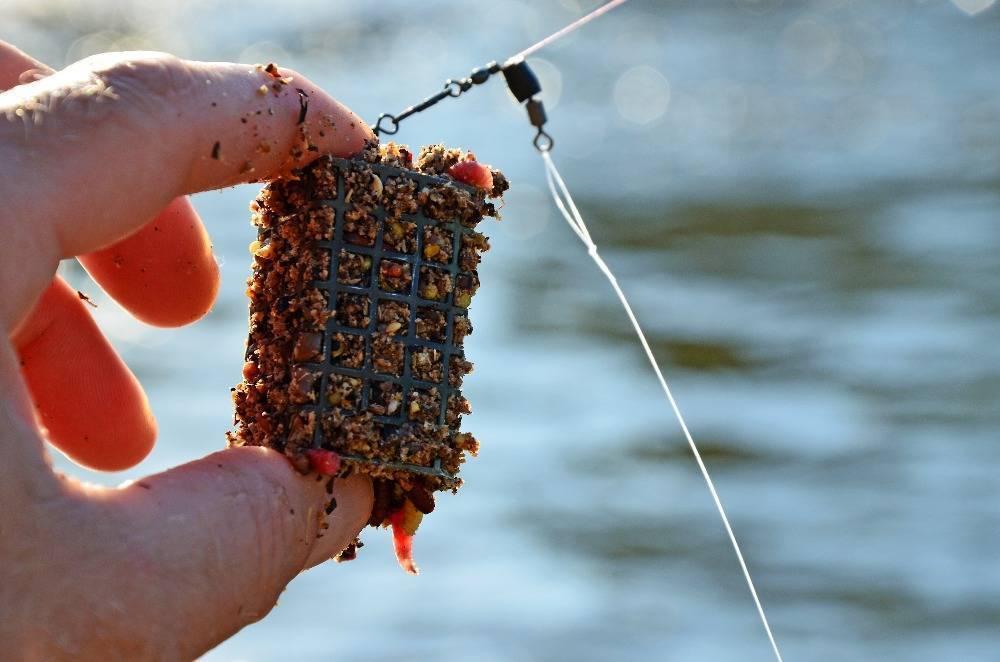 Ловля сазана на фидер: оснастка, прикормка и наживка, техника ловли