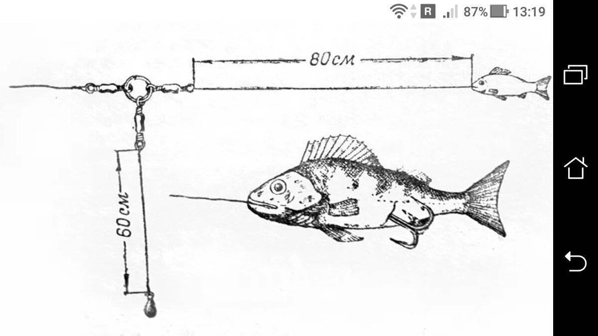Ловля окуня на живца с помощью поплавочной удочки
