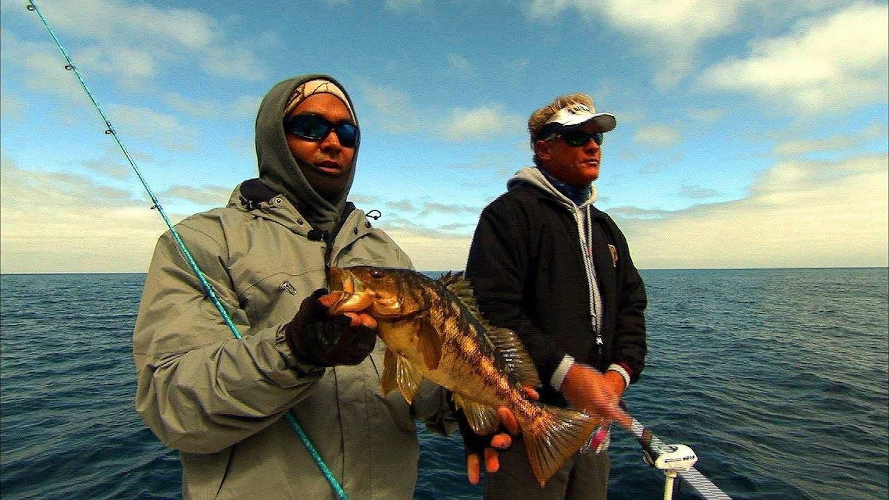 Калико рыбалка – южная калифорния