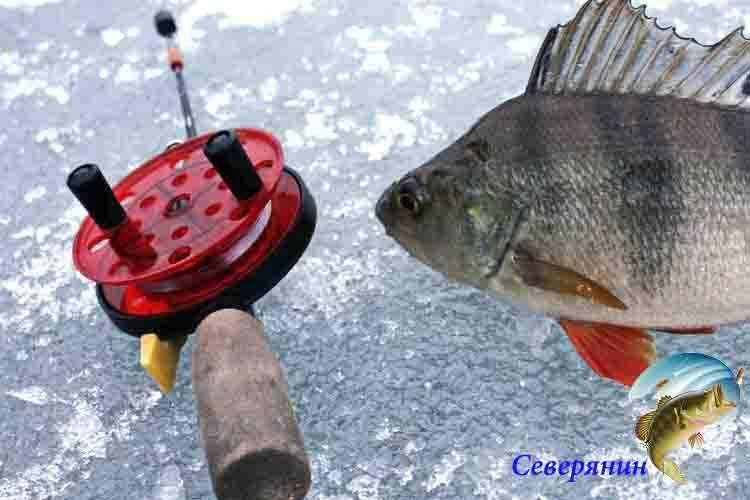 Зимняя рыбалка на окуня: какие снасти применять и на что ловить зимняя рыбалка на окуня: какие снасти применять и на что ловить