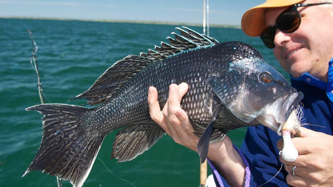 Рыбалка в крыму: куда пойти, что можно поймать
