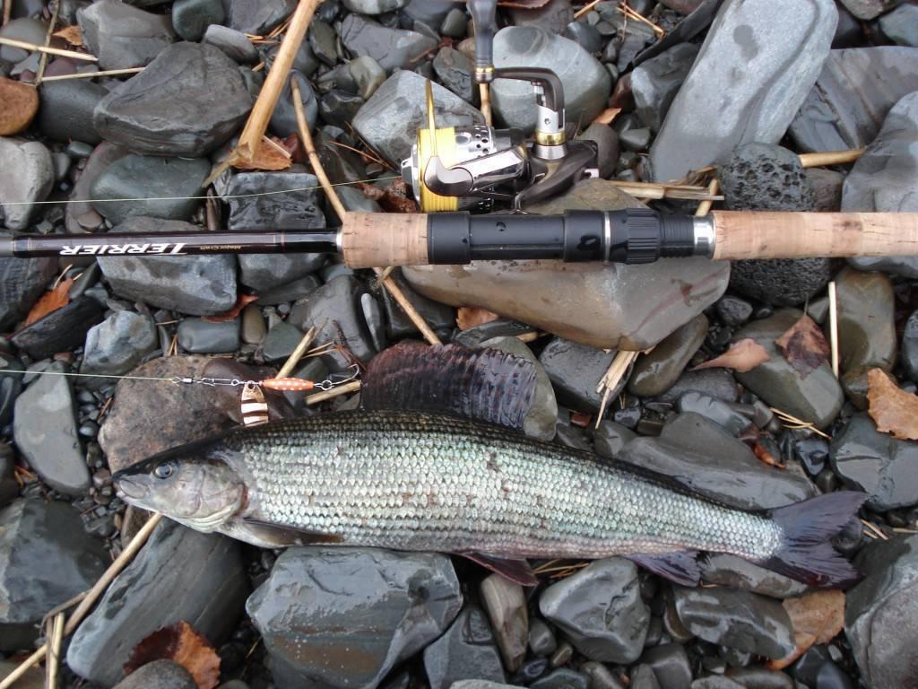 Рыбалка на красноярском море — рыбные места, снасти, приманки