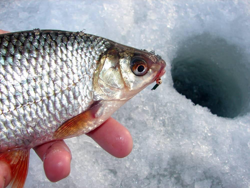 Ловля чебака на мормышку летом - про рыбалку