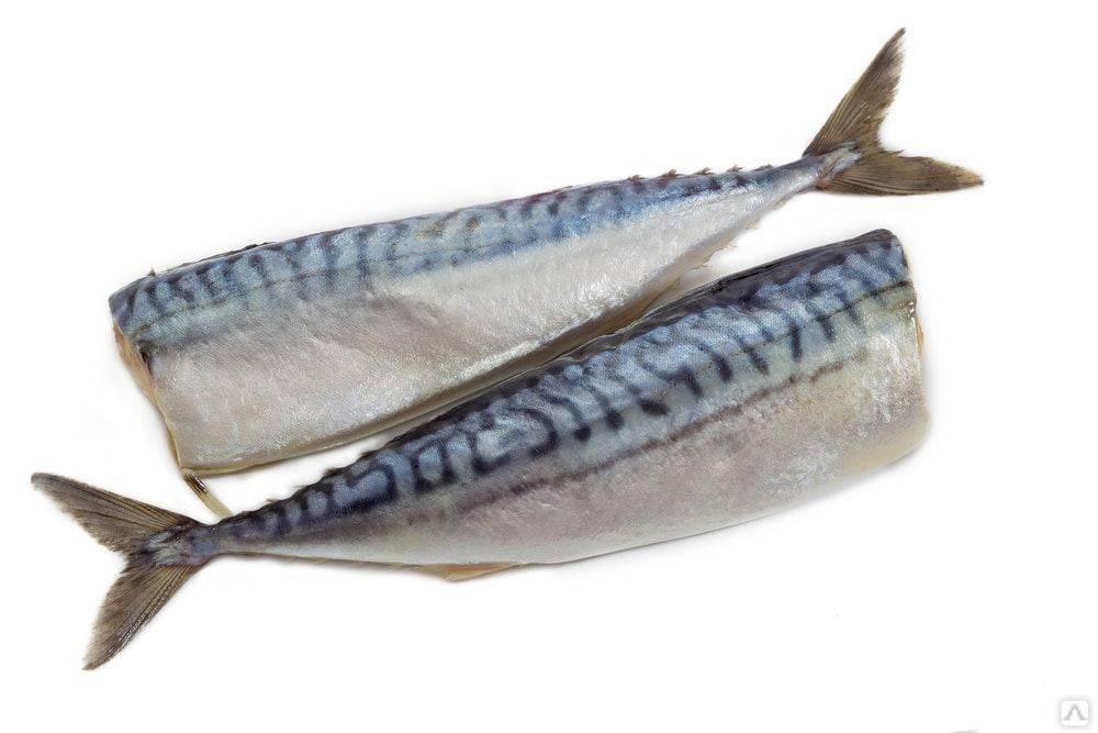 Рыба скумбрия - описание полезных свойств и правила употребления