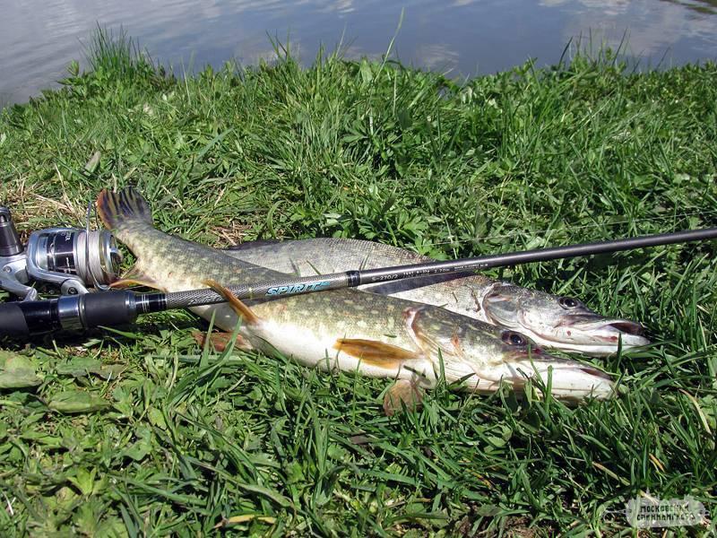 Ловля щуки на малых реках на спиннинг