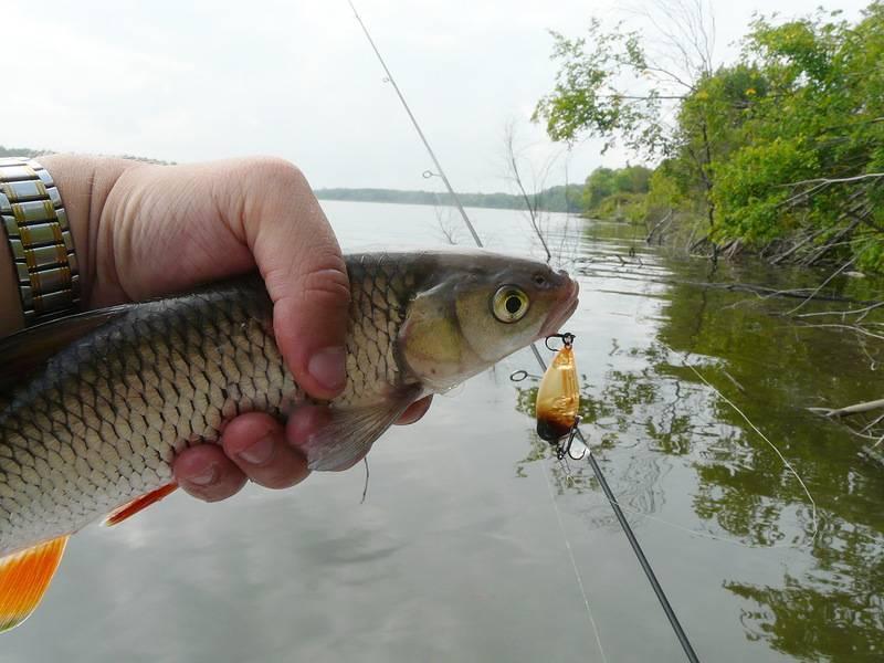 Рыбалка на угре: какая рыба водится в реке, лучшие места для ловли