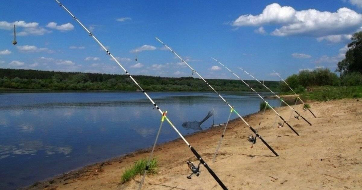 Рыбалка в тамбовской области. форум и отчеты рыбаков