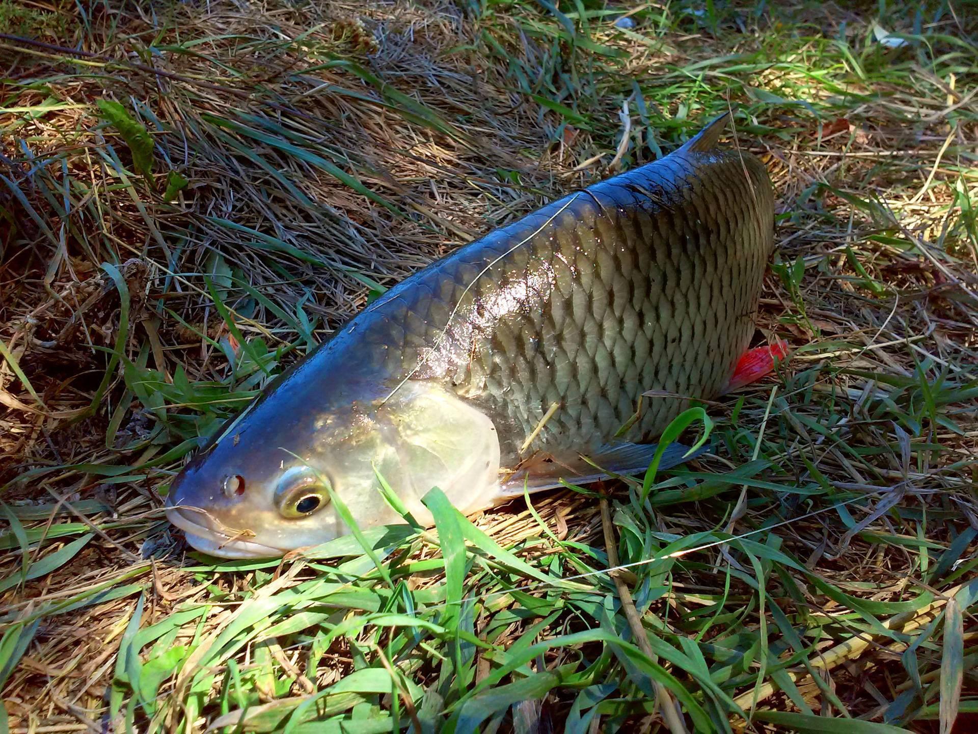 Рыбалка в ишимском районе
