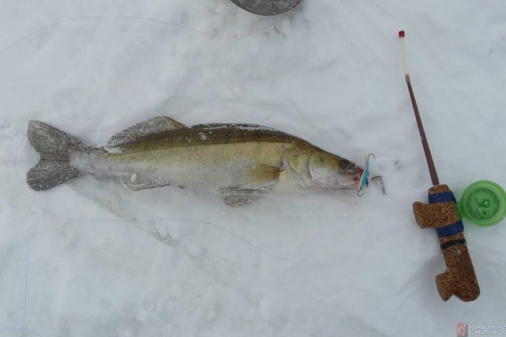 Ловля берша зимой - читайте на сatcher.fish