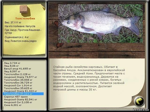 Толстолобик | рыбацкие истории: школа рыбалки
